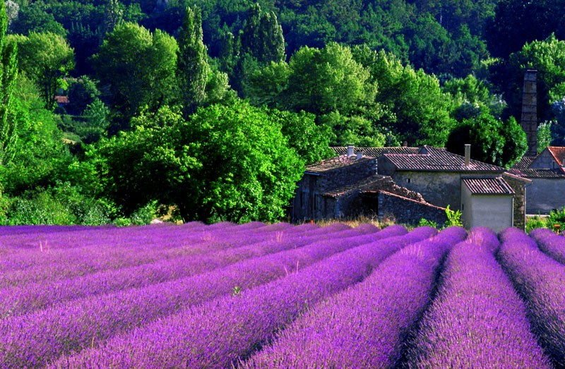Essence of Provence