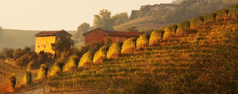 Piemote-Tuscany crop