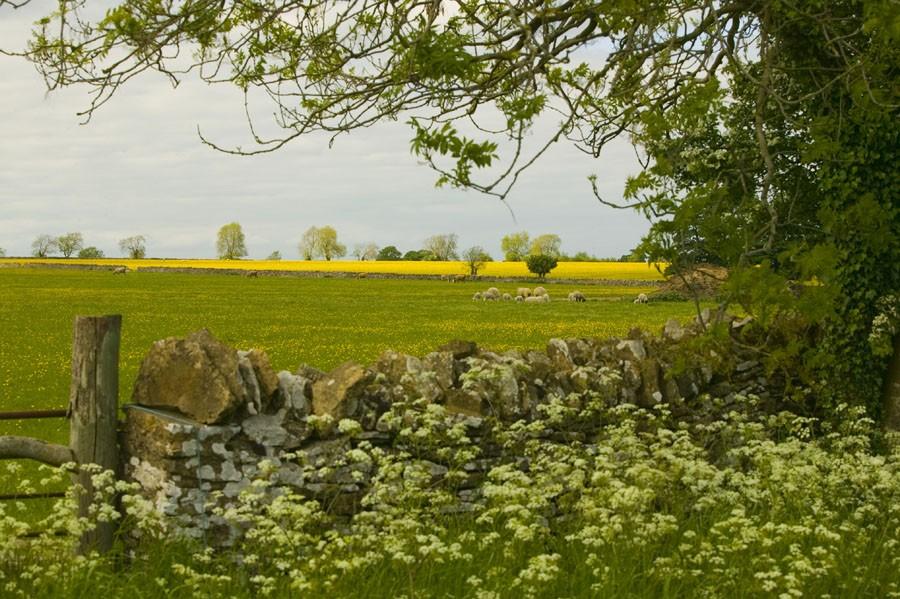 Steep Pasture