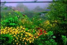 Monet Garden 19