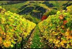Convering Vines