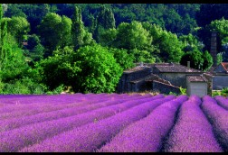 Essence of Provence