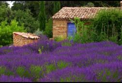 Jardin du Lavandin