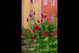 Les Fleures Rouge