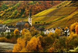 Mosel Morning