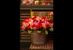 Nom de la Rose IV  (3)