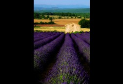 Provencal Summer